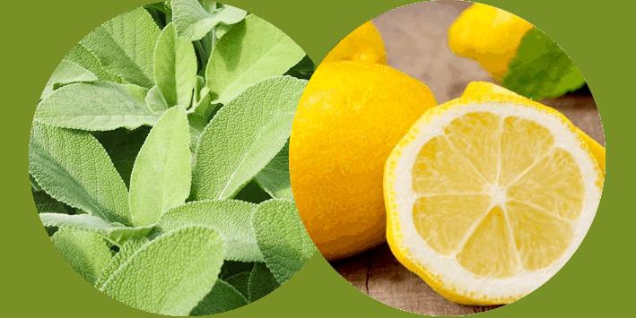 limone_salvia